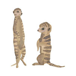 THATS MINE WALLSTICKER TIMON BABIES Brun - Thats Mine