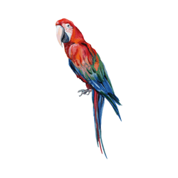 THATS MINE WALLSTICKER MANUEL THE PARROT Multicolor - Thats Mine