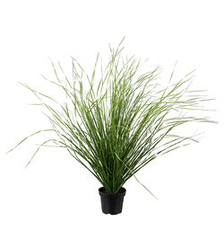 Mr Plant gressplante 60 cm - Mr. Plant