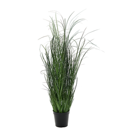 Mr Plant gressplante 80 cm - Mr. Plant